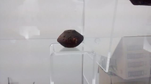 Some 500 artifacts discovered in the Thracian necropolis have been shown to the public for the first time in the exhibit of the Pernik Museum. Photos: Pernik Municipality