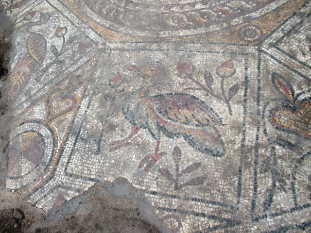 One of the bird depictions surrounding the peacock medallion in the middle of the newly found mosaic floor. Photo: Monitor daily