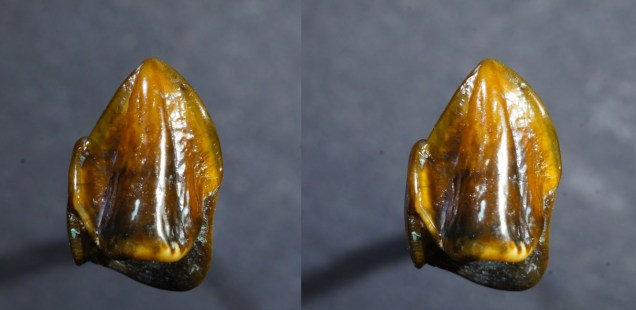 German Archaeologists Find 9.7-Million-Year-Old Hominin Teeth in 'Mystery' that 'Could Rewrite History'