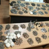 11,000 Coins, Archaeological Artifacts Seized on Bulgaria's Border in Attempted Smuggling from Turkey into EU