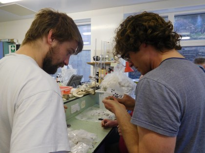 Examining and cataloguing finds in the lab