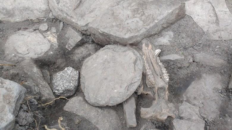 Pig skull, pot lid and garnet mica schist