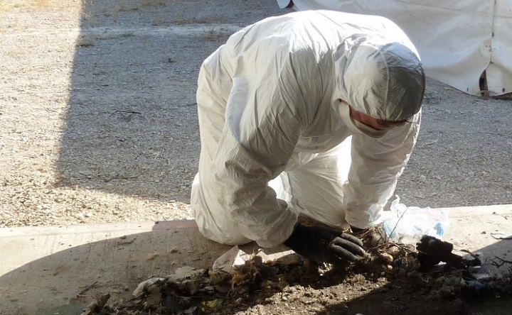 Episode 82: What is involved in forensic archaeology and disaster victim identification?