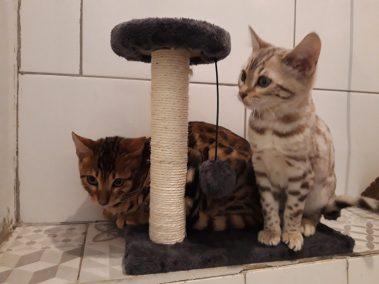 Orea et Oups chatons