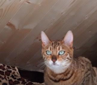 voici Osiris