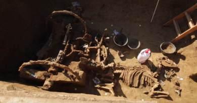 Un char romain et ses chevaux trouvés dans un tumulus en Croatie