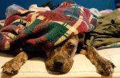 Kellie Catron's dog, Echo