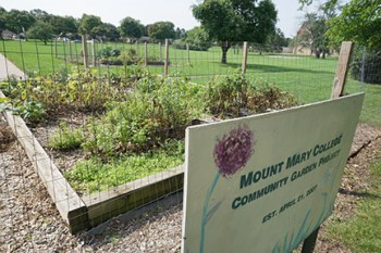 Mount Mary's community garden, consisting of two 16-by-20-foot plots, has provided fresh produce to local food pantries since 2007.