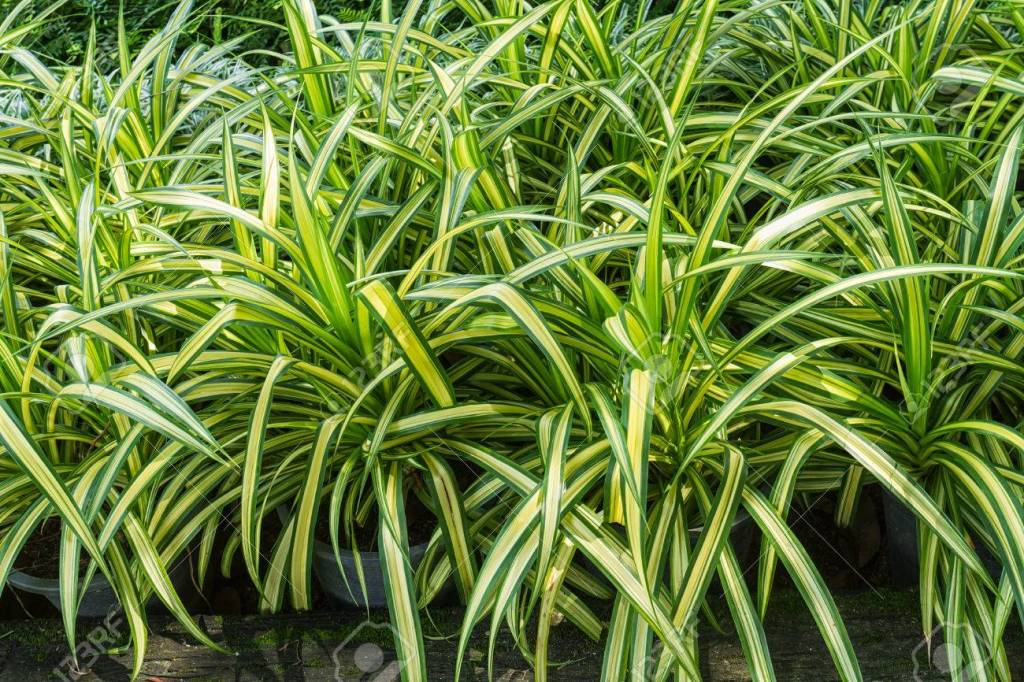 The spider plants for vertical building facades