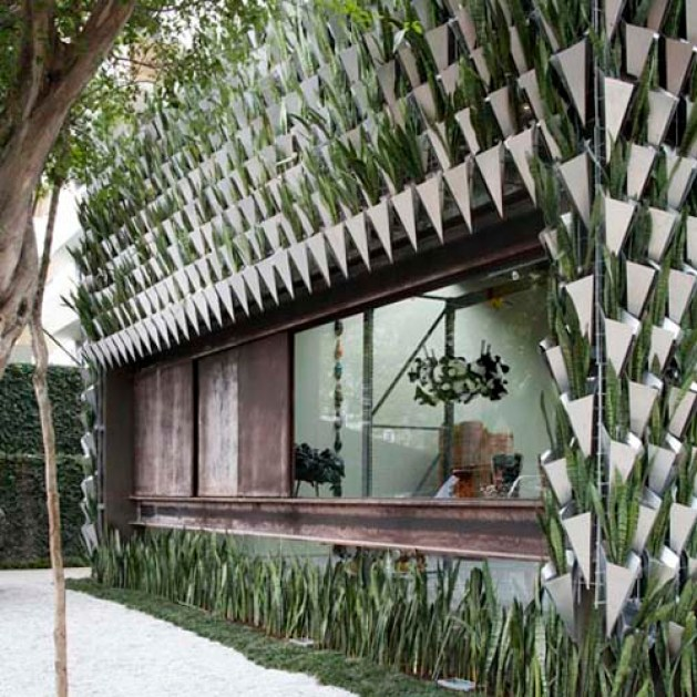 Plants for vertical building facades, the Snake plant