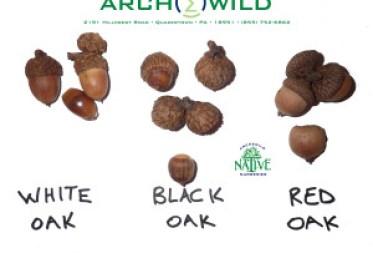 ArcheWild 2015 - White Black Red oak identification