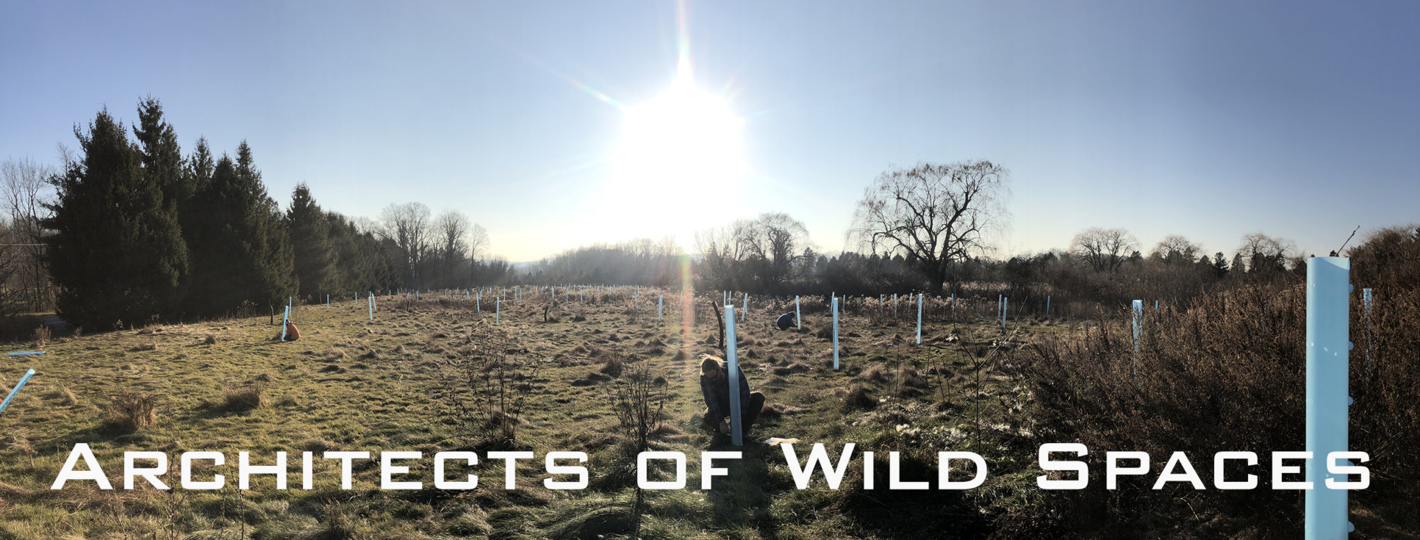 2019 ArcheWild – Woodland Hills – Cover picture with title 2560