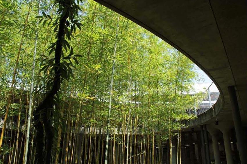Makino Museum of Plants / Hiroshi Naito