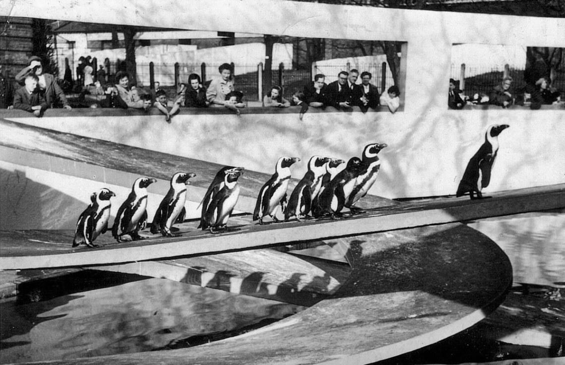 Penguin Pool of London / Berthold Lubetkin