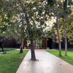 Trees -Norton Simon Museum in Pasadena / Ladd & Kelsey Architects