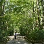 Garden - Aman Kyoto Resort / Kerry Hill Architects