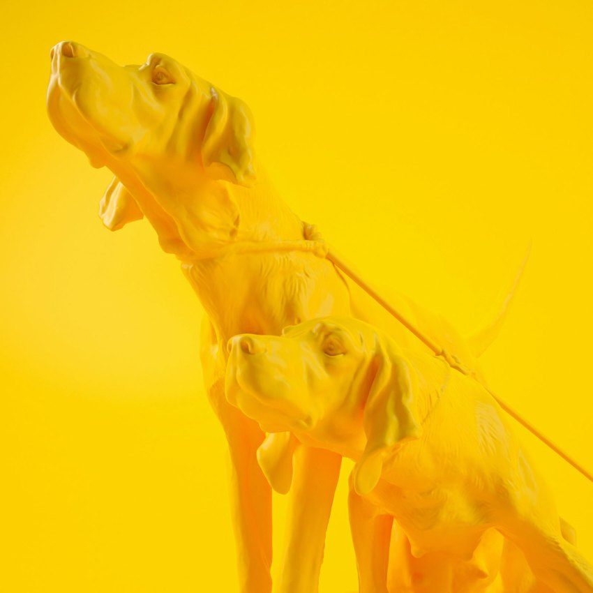 Yellow Dog Image. All yellow