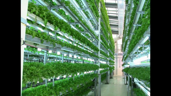 Vertical industrial farming