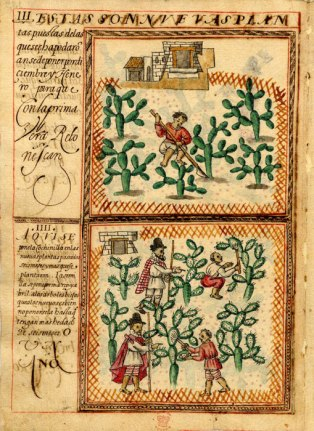 Cochineal treatise