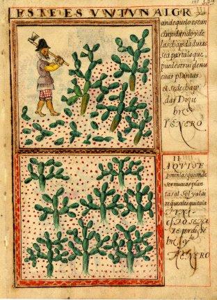 Twee bladzijden uit het verslag van Gomez de Cervantes