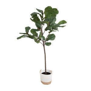 Fiddle_Leaf_Tree_1.jpg