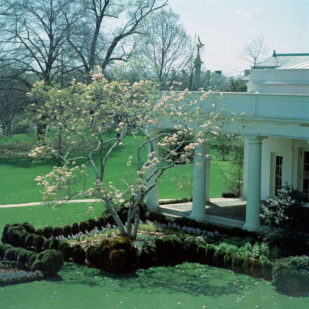 a flowering tree next to a white portico