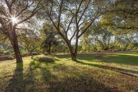 Grove of live oaks made a natural canopy for the ceremony
