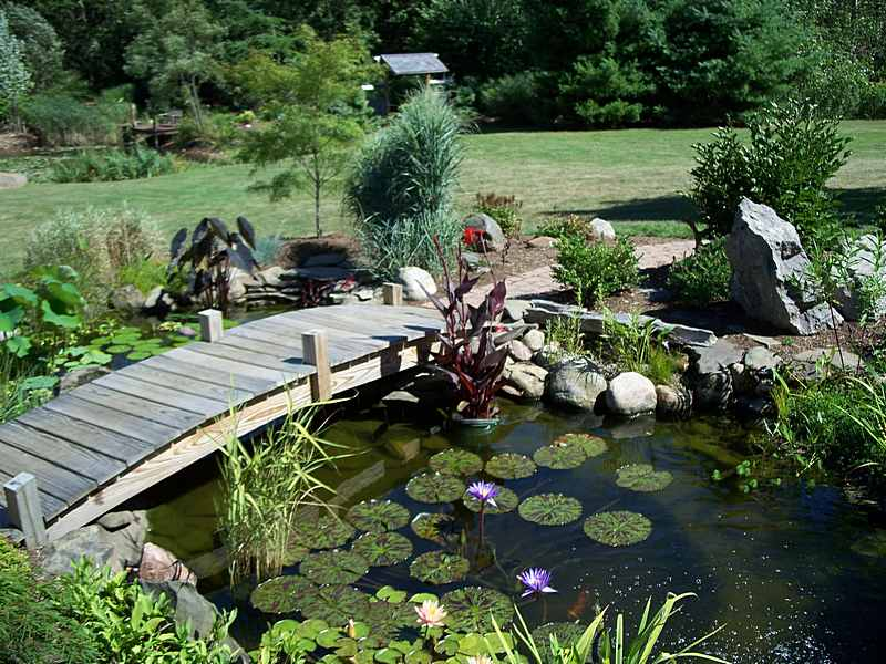 Pond Design Ideas
