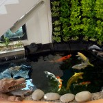 Cozy Koi Pond Can Be Placed Under The Stairs