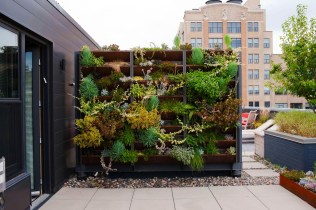 Use The Vertical Room for Make a Beautiful and Attractive Rooftop Garden