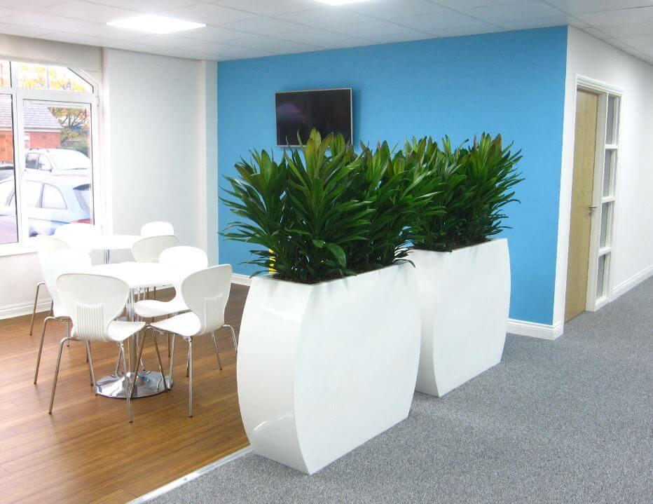 Great Indoor Plants