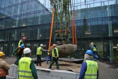 KBC. Planting trees.