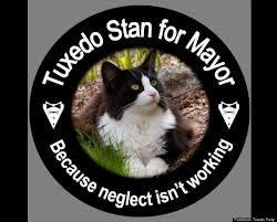 Քանատայի Նովա Սքոշիա շրջանին Հալիֆաքս քաղաքին մէջ Թաքսիտօ Սթան կոչուած կատու մը ներկայացած է իբրեւ քաղաքապետի պաշտօնի թեկնածու: