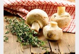 5-bonnes-raisons-de-manger-des-champignons_exact441x300