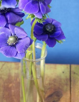 Որպէսզի ծաղկամանին ծաղիկները երկար դիմանան, ջուրին մէջ քանի մը կաթիլ վոտկա եւ թէյի դգալ մը շաքար աւելցուցէք: