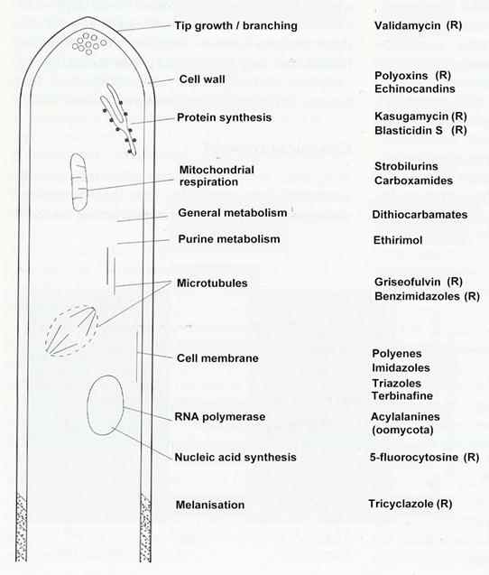 Fig. 17.2. The main cellular targets for chemical control