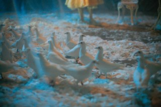 Doves used in a performance art piece by Kathy