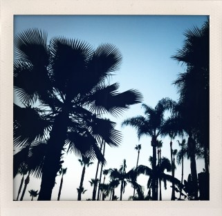 Los Angeles, land of the never ending palm tree