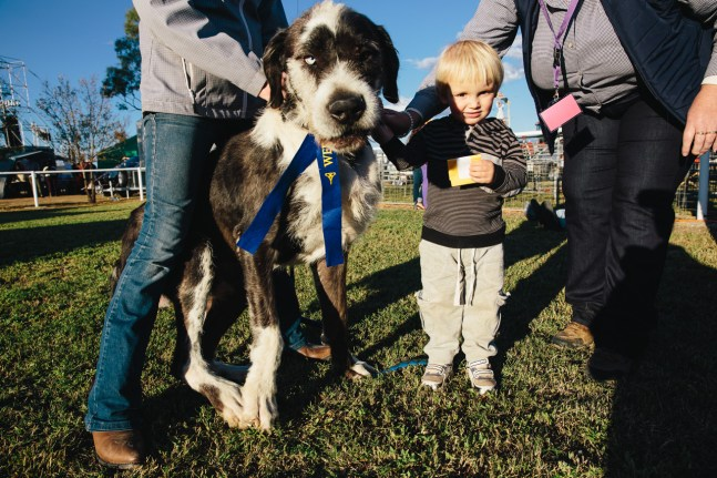 Randy the dog, winner of the Biggest Pet prize at Wee Waa show with Bill, aged 2