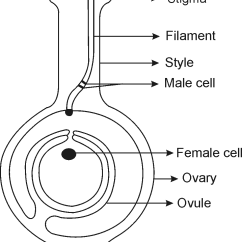 Flower Parts Diagram Without Labels Wiring For Warn 9000 Winch Of A Plant Schematic Library Organs Flowers