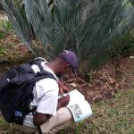 Cycad Conservation, Trade and Law Enforcement