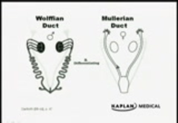 kaplan_step2_gynecology : Free Download, Borrow, and
