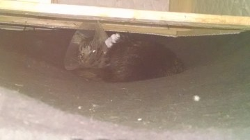 Hiding under the bed with the Cone of Shame