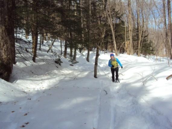 snowgaine race snow in trees