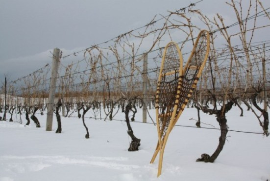 Winter Winter Activity Tour- Ontario- Thirty Bench