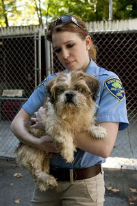 Southbury assistant animal control officer Martha Stephens cares for a Shitzhu mix that was one of the 31 dogs seized at the home of Nancy Boeckel and her mother Norma at 1232 Georges Hill Road in Southbury last Thursday and is now being cared for at the Southbury Animal Control location. This Bob Falcetti Republican-American