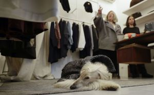 In this image taken on Tuesday, Jan. 16, 2018, fashion designer Giovanna Temellini, top, talks as her dog Ulisse, an Afghan greyhound, wears one of her creations, at the Temellini boutique, in Milan, Italy. Milan has long been known for its pret-a-porter. Now the pooches want in with a new line of haute couture for canines: Temellini Dog a Porter. (AP Photo/Luca Bruno)