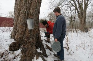 Zach Adams, environmental educator at the Sharon Audubon Center, explains the process for tapping trees for sap to Joan Bowen of Sharon during a workshop Saturday. Ruth Epstein Republican-American