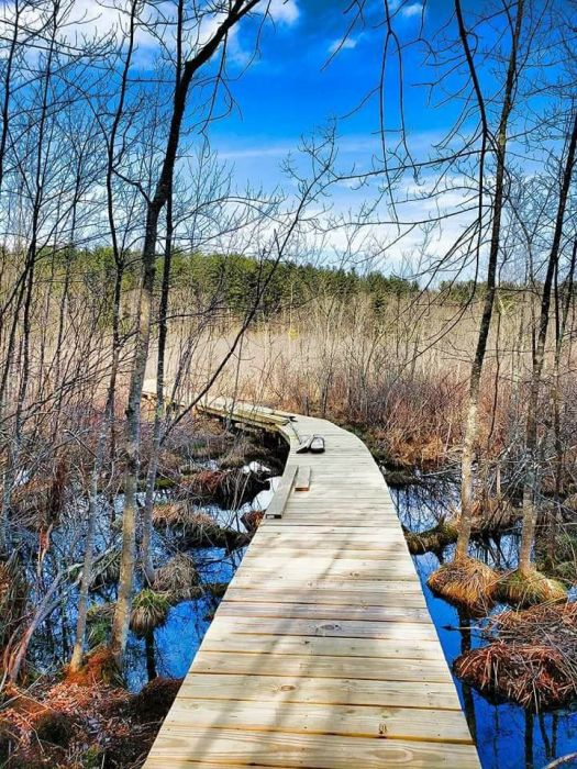 A new boardwalk in the Beaver Brook wetlands at Peoples State Forest in Barkhamsted will be dedicated on July 1 by the Friends of American Legion and Peoples State Forest. The public is invited to attend the short ceremony and to walk through the wetlands before attending a picnic. Contributed