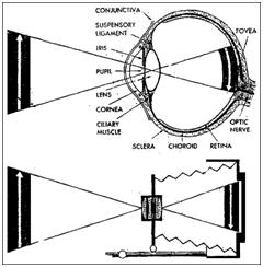 Andhra Pradesh (English Medium) Std 9 Physics Study
